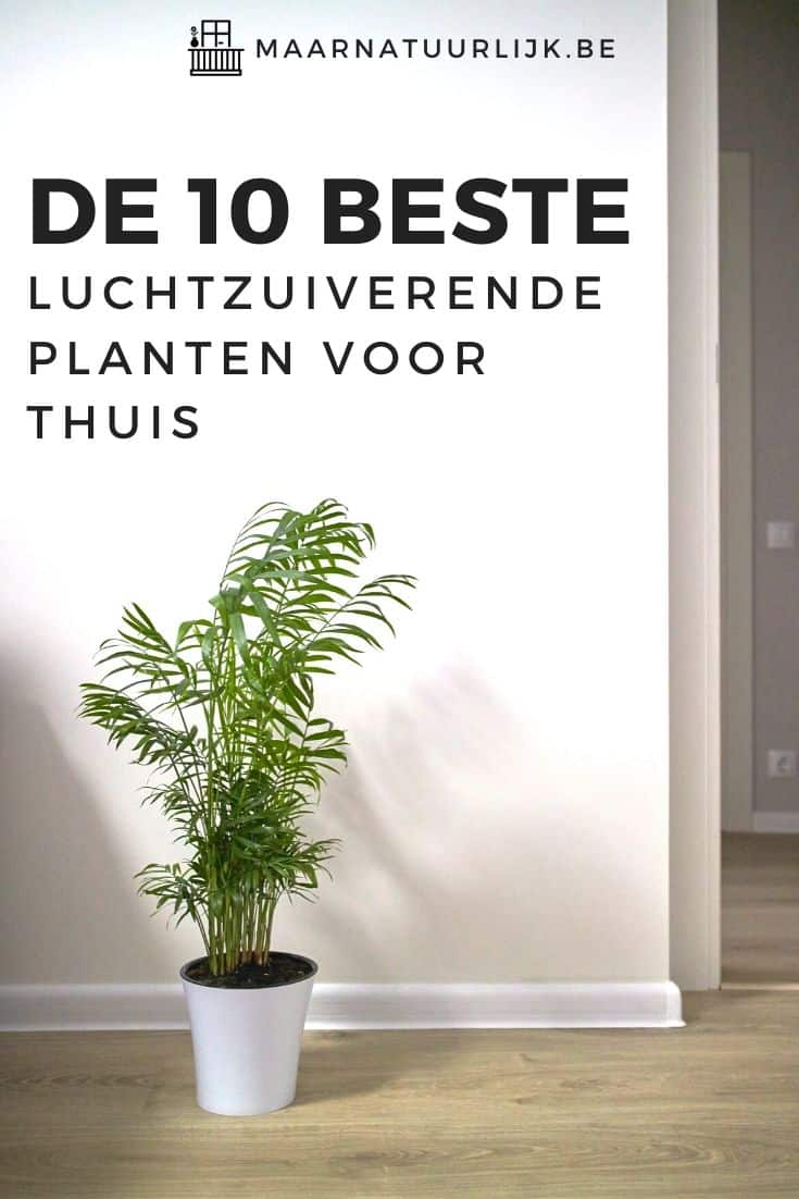 10 beste luchtzuiverende planten zoals de areca palm
