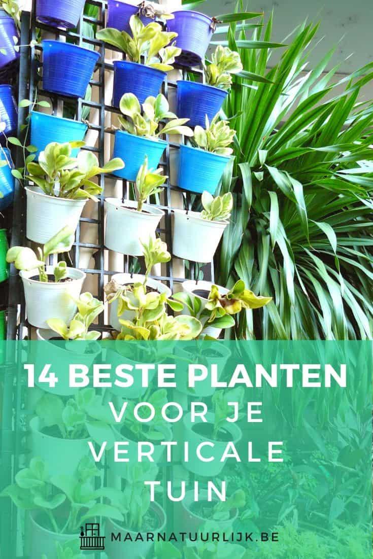 14 beste planten voor je verticale tuin beoordeeld