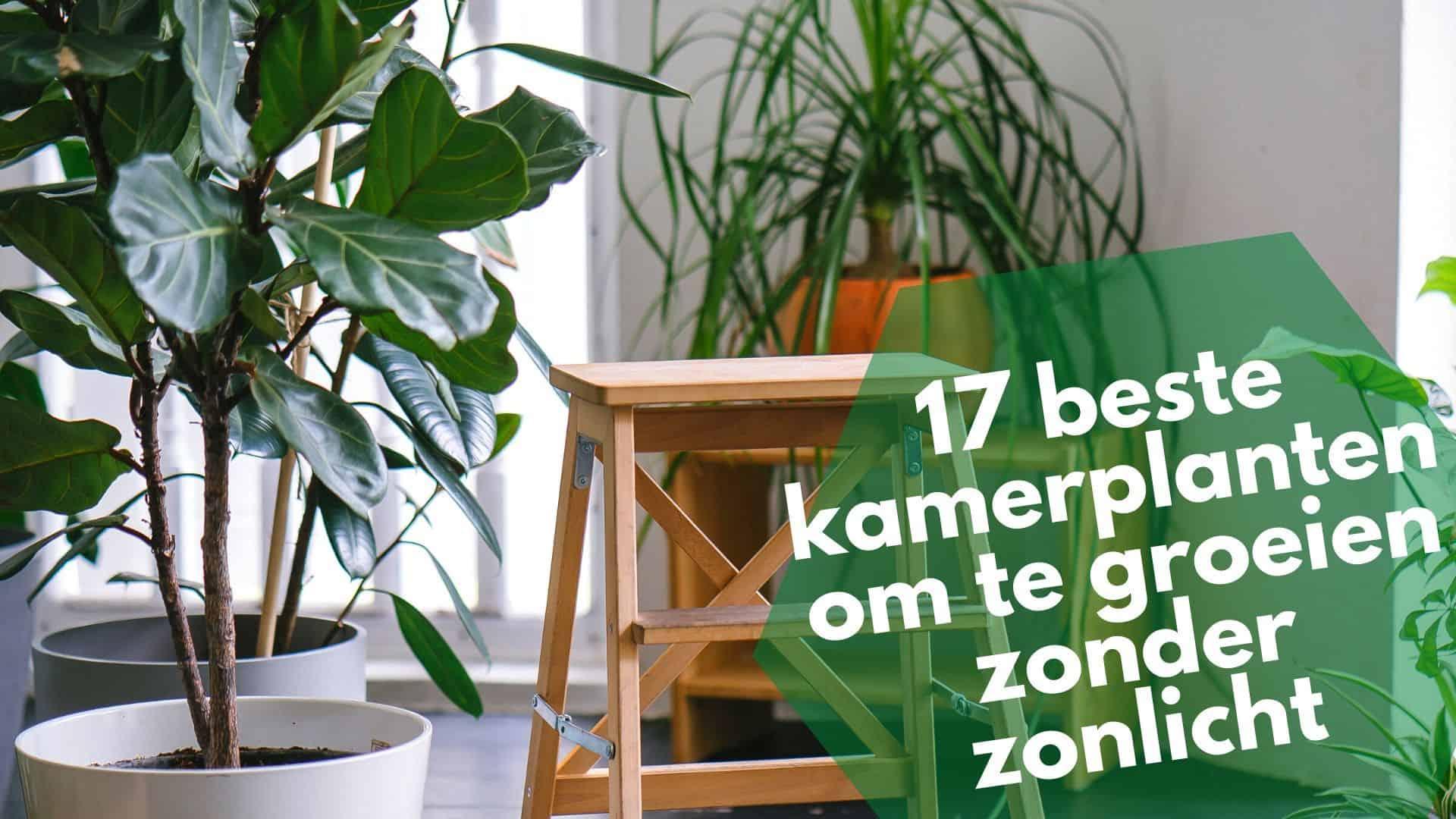 De 17 beste kamerplanten die groeien zonder zonlicht