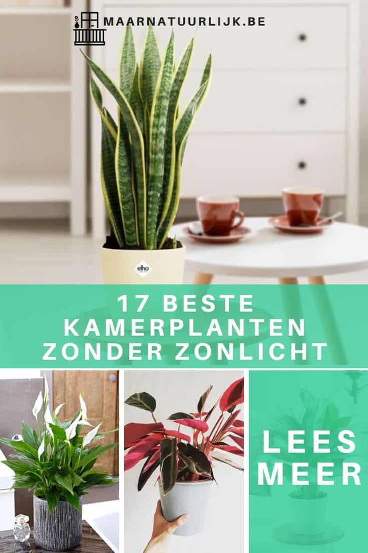 17 beste kamerplanten zonder zonlicht