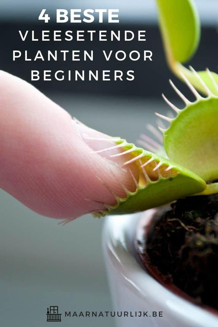 Vleesetende venus flytrap bijt in iemands vinger