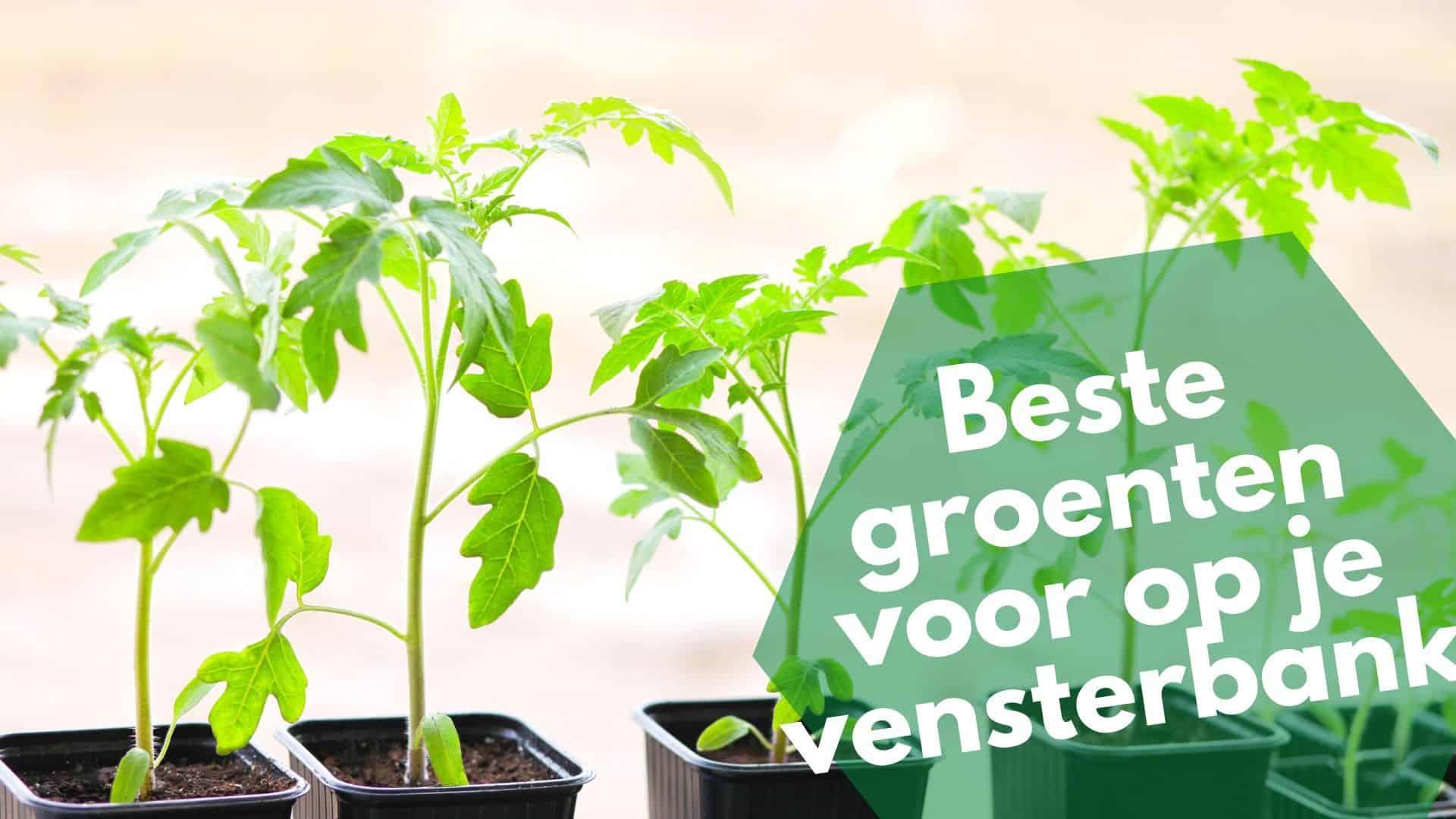 Beste groenten voor op je vensterbank