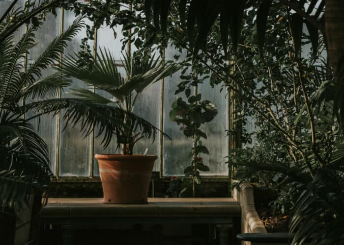 Beste grote kamerplanten
