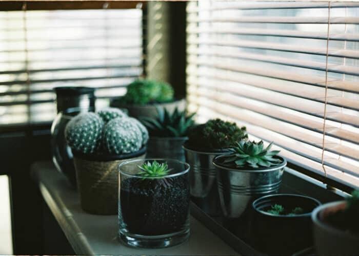 Beste planten die groeien zonder zonlicht