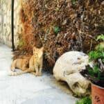 Beste planten en kruiden voor je verticale tuin | start met deze