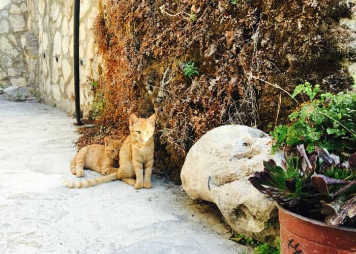 Beste planten voor verticaal tuinieren