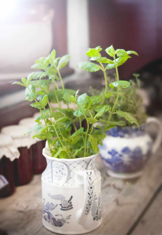 De 1 pot tuin voor binnenshuis