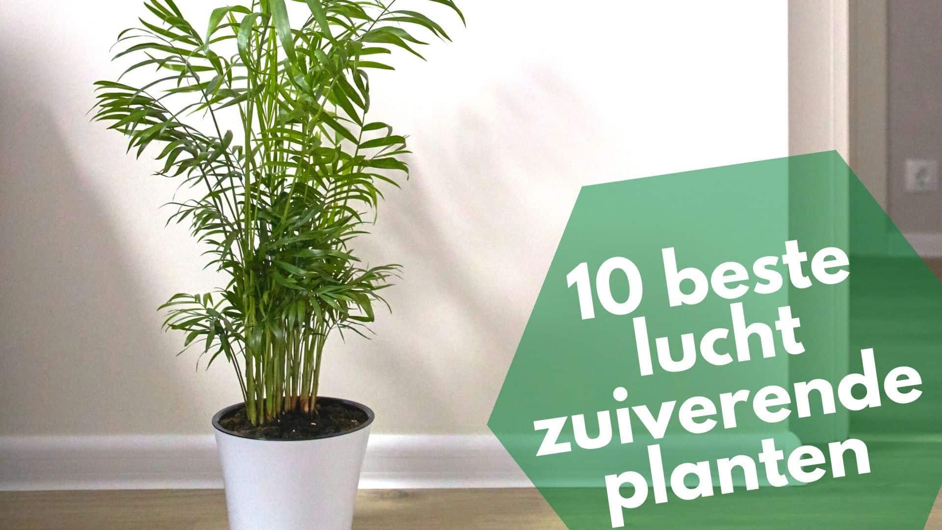 Deze planten zuiveren de lucht het best en geven de meeste zuurstof