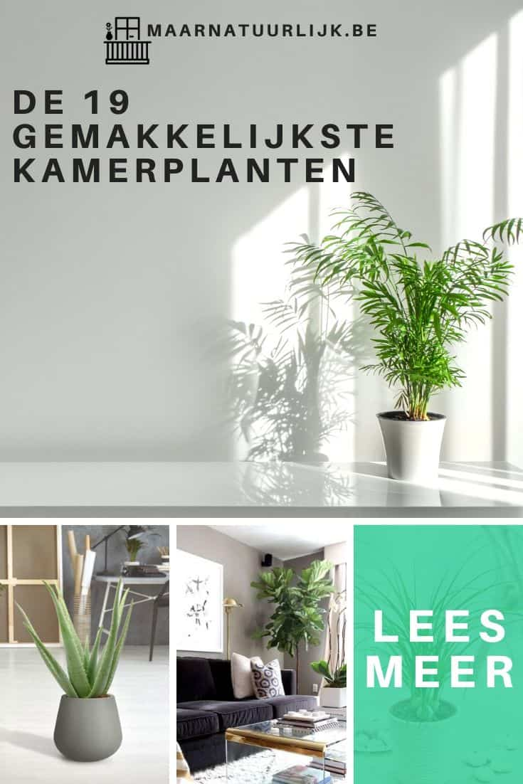 Collage van 4 gemakkelijke kamerplanten