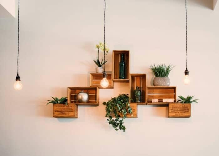 Gemakkelijkste kamerplanten