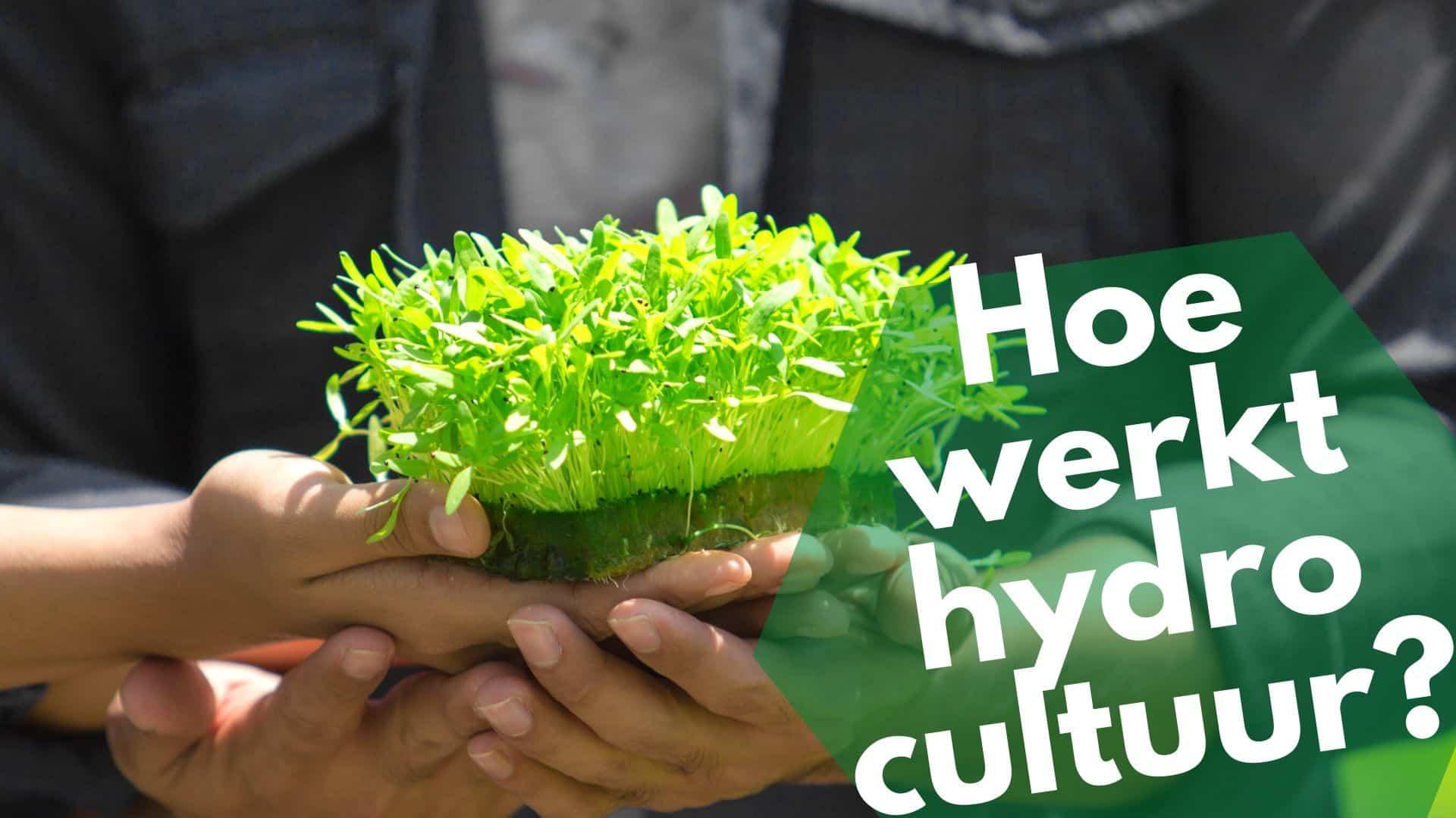 Hoe werkt hydrocultuur
