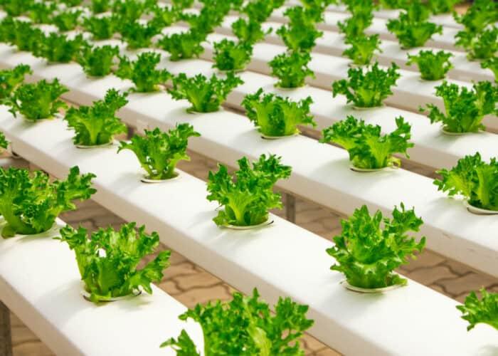 Hydrocultuur groenten