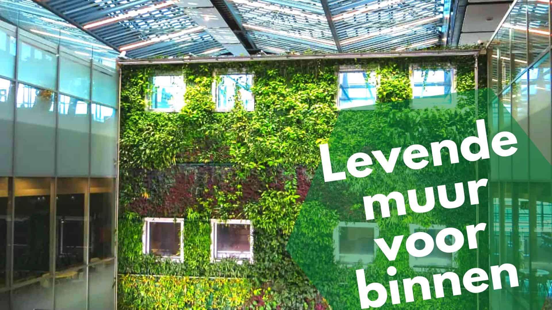 Levende muur of groene wand: dit is hoe je er eentje maakt voor binnen