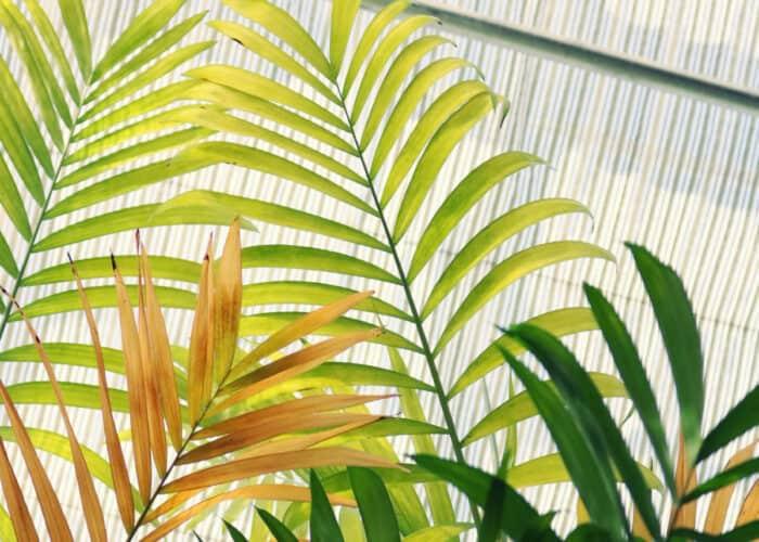 Luchtzuiverende planten die zuurstof produceren