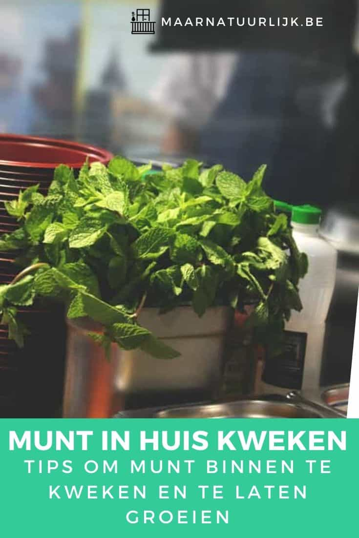 Munt in huis kweken tips
