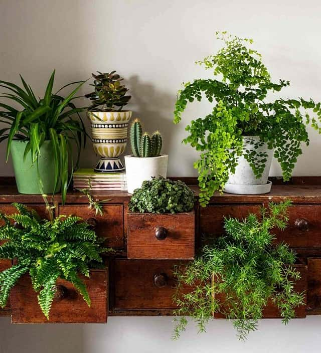 Planten in een oud dressoir kast
