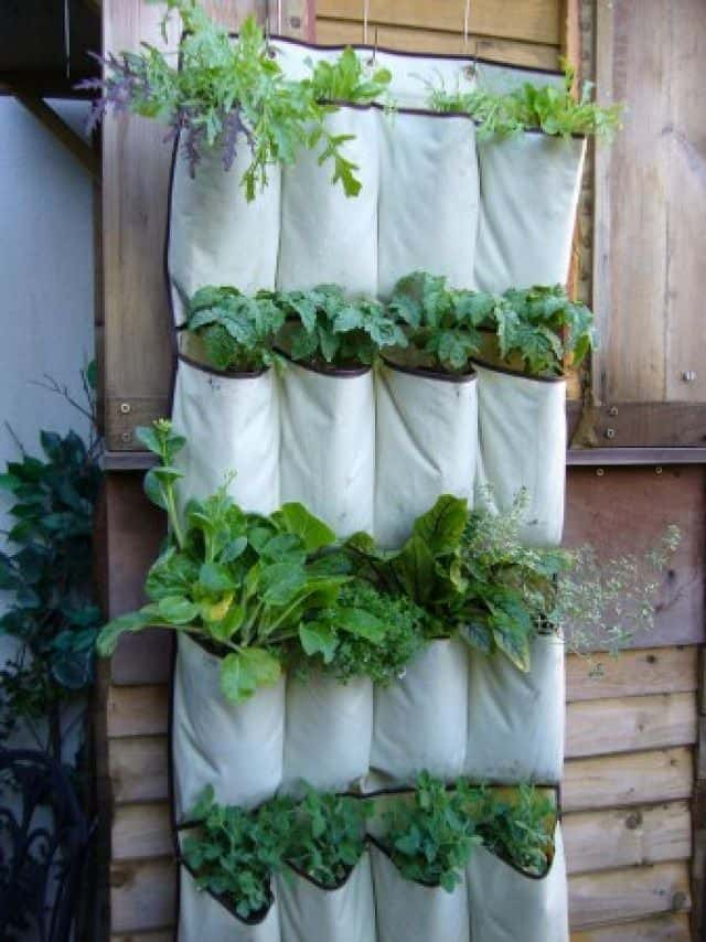 Schoen organiser verticale tuin