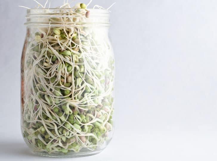 Tauge groeien in een pot op je vensterbank
