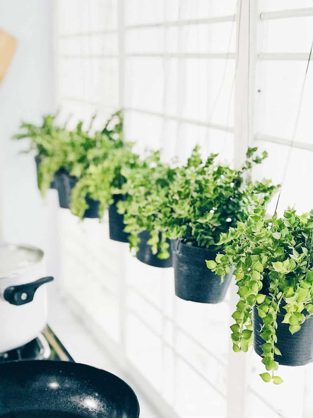Verticaal hangende planten