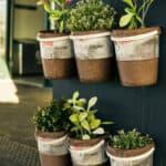 12 beste kruiden om binnen te kweken | Indoor kruiden binnenshuis