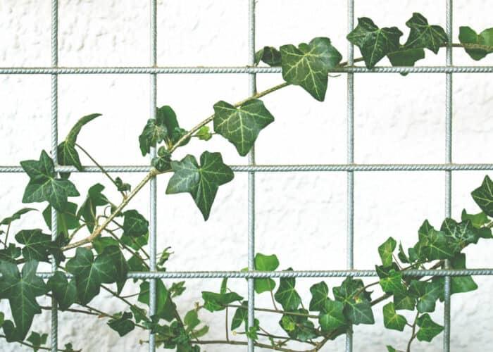 Verticale tuin met gaas