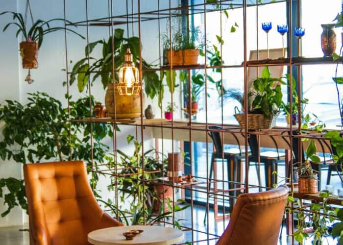 Verticale tuin met hangende planten