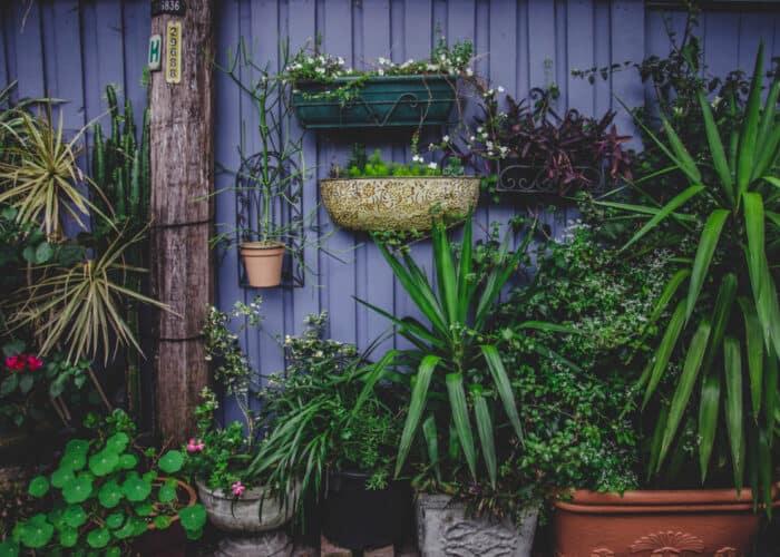 verticale tuin ideeen voor binnen