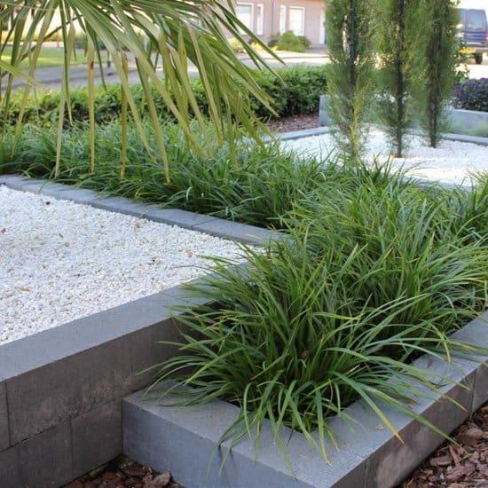 Carex-Morrowii-voor-binnen-in-de-schaduw