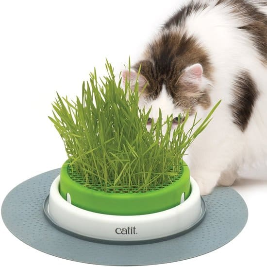 Cat-it-gras-planter-kattengras-bak