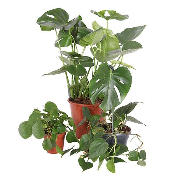 Gemakkelijke-kamerplanten-voor-in-de-schaduw