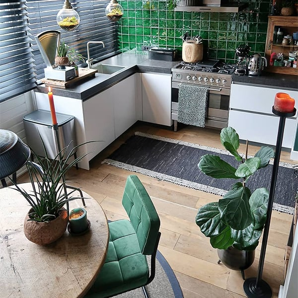 Vioolbladplant-ficus-als-grote-kamerplant