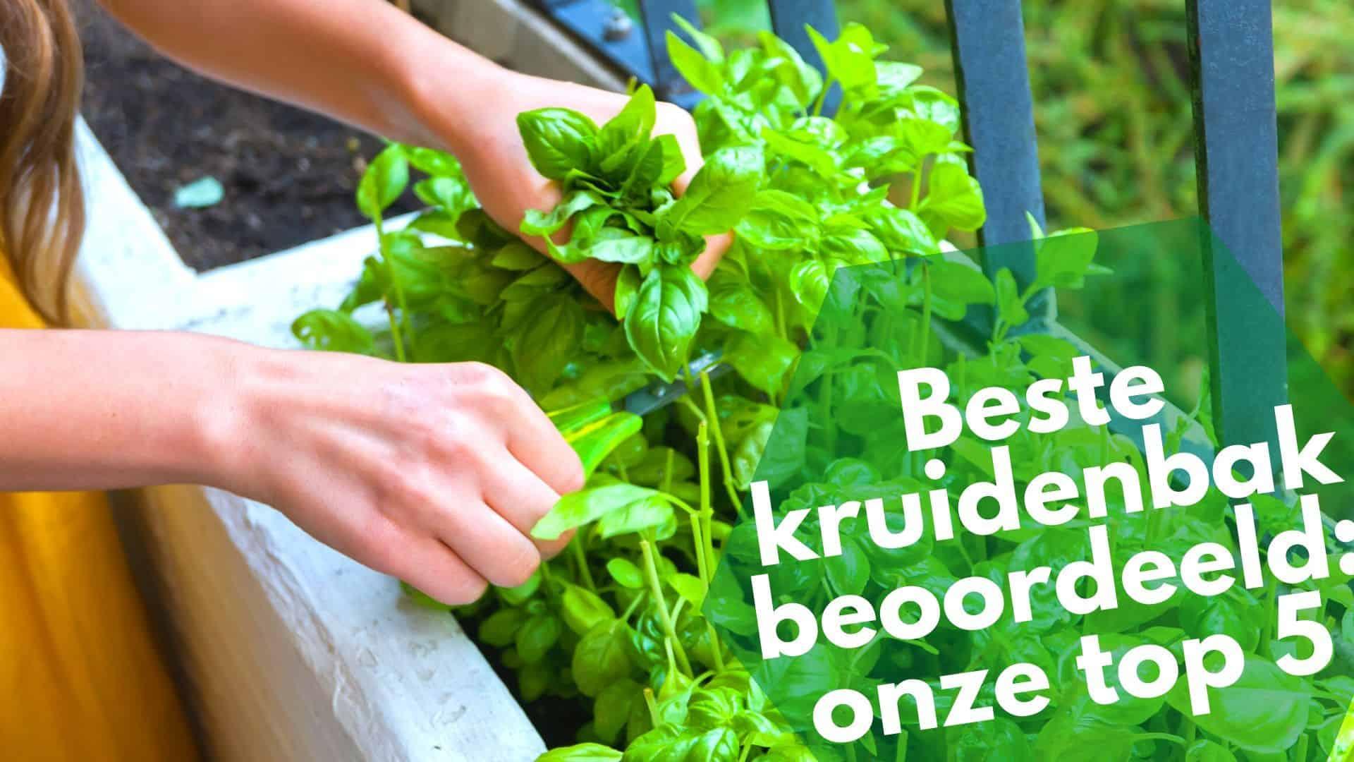Beste kruidenbak top 5 | lekker thuis je eigen kruiden kweken