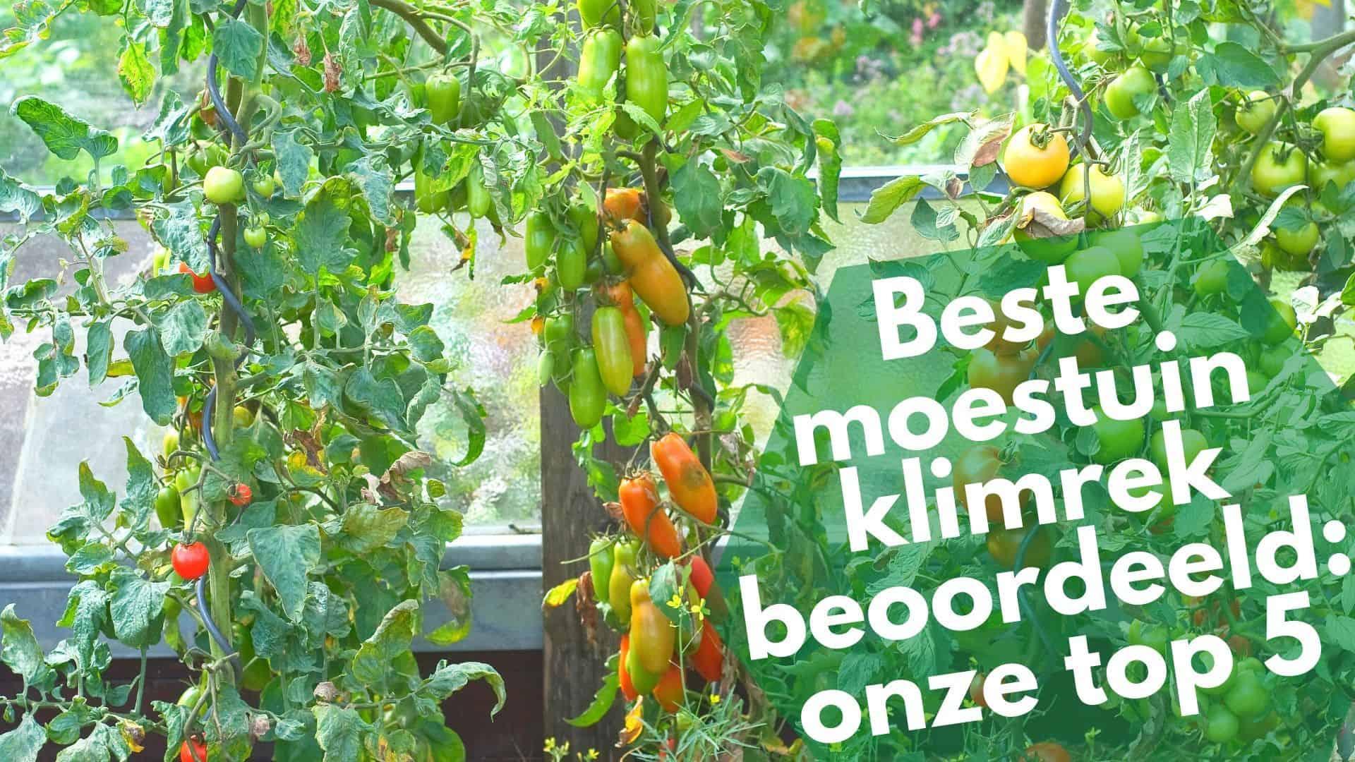 Beste moestuin klimrek | 5 soorten rekken voor jouw groentjes