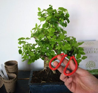 Bonsai-growkit-De-complete-set-om-je-eigen-bonsai-te-kweken