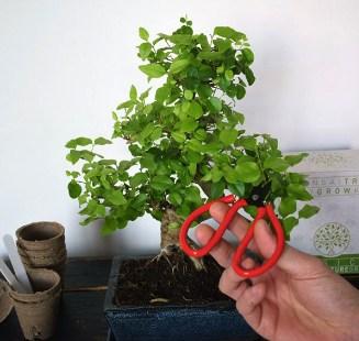 Bonsai-growkit-De-complete-set-om-je-eigen-bonsai-te-kweken