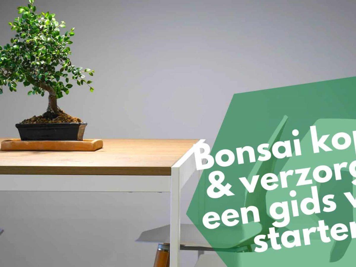 Bonsai Kopen Verzorgen 7 Must Have Bonsai Tools Voor Starters