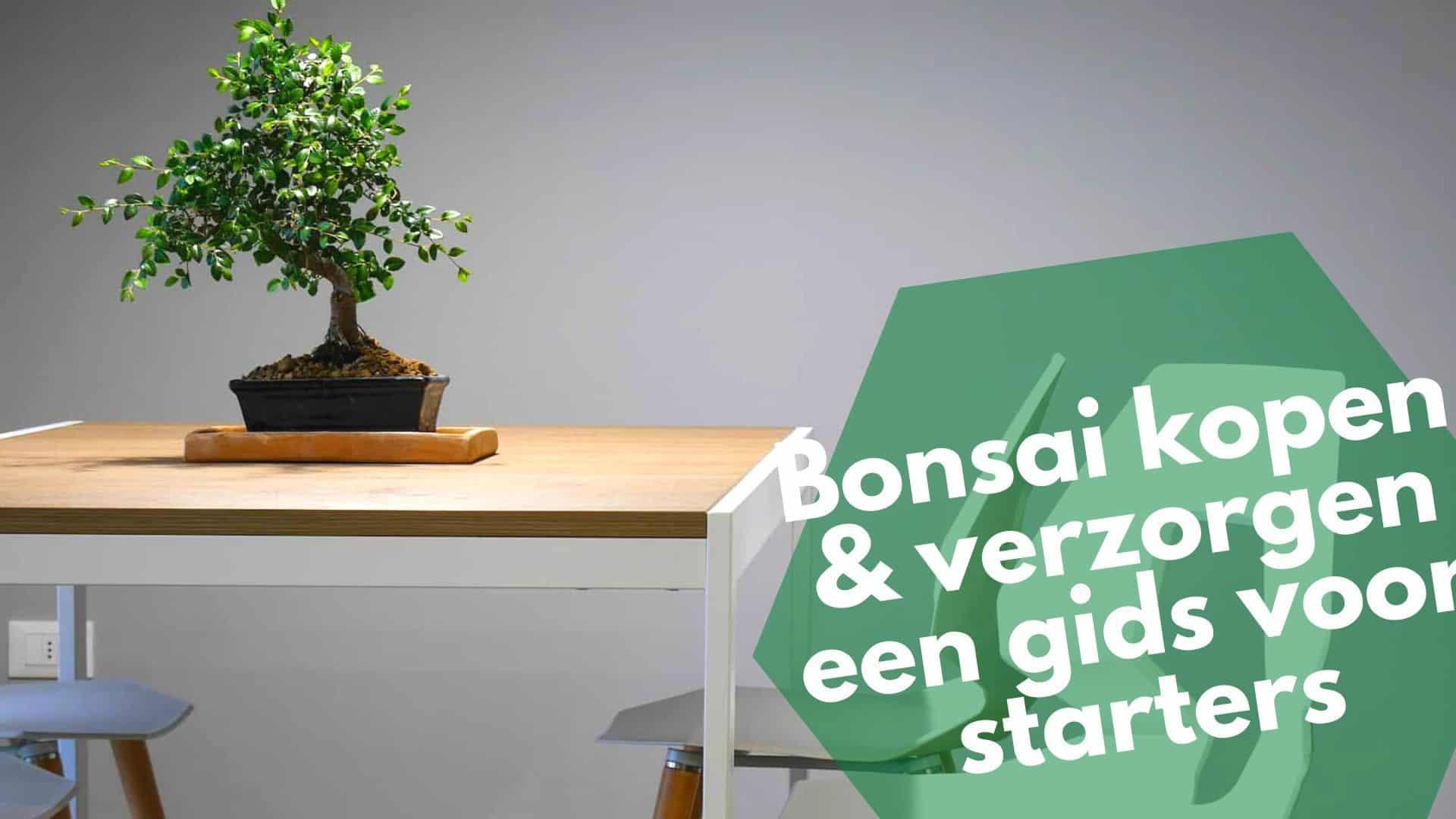 Bonsai kopen & verzorgen | 7 must-have bonsai tools voor starters