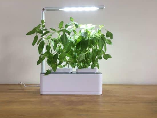 Kweeklicht kruidentuin Zelf basilicum of munt kruiden kweken