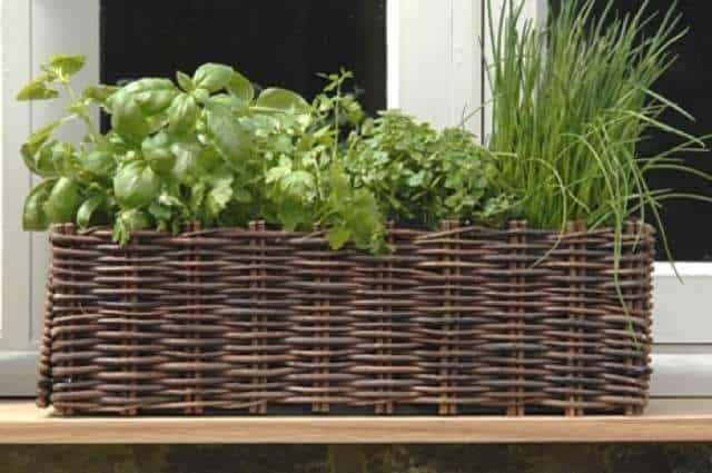 Window box planter natural kruidenbak voor de vensterbank