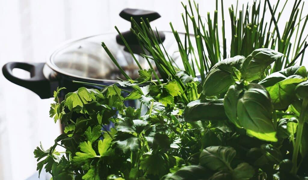 Beste kruidenbak thuis tuinkruiden kweken