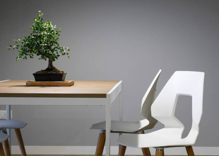 bonsai verzorgen | beste bonsai gereedschap