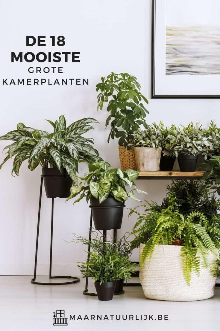 KAmer vol met grote kamerplanten