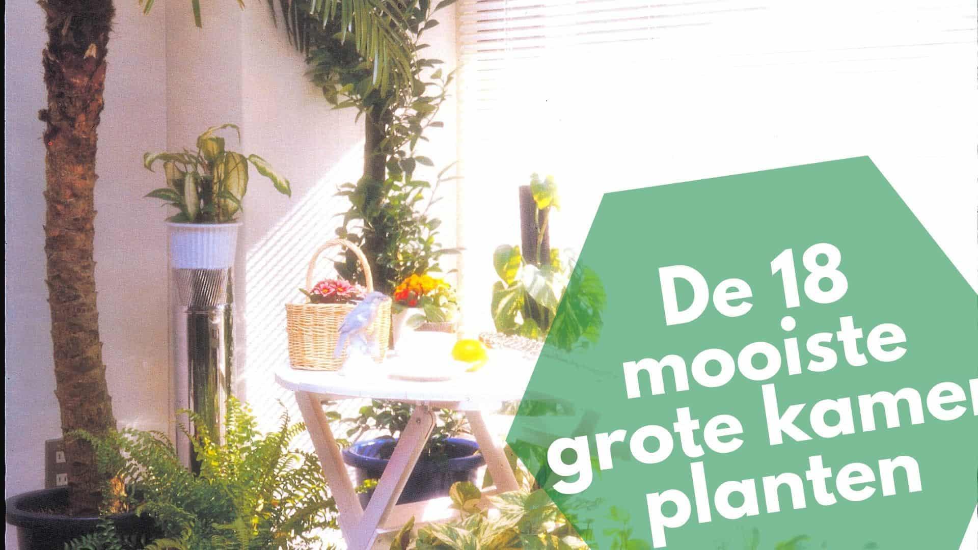 18 leukste grote kamerplanten | inspiratie voor bij jou thuis