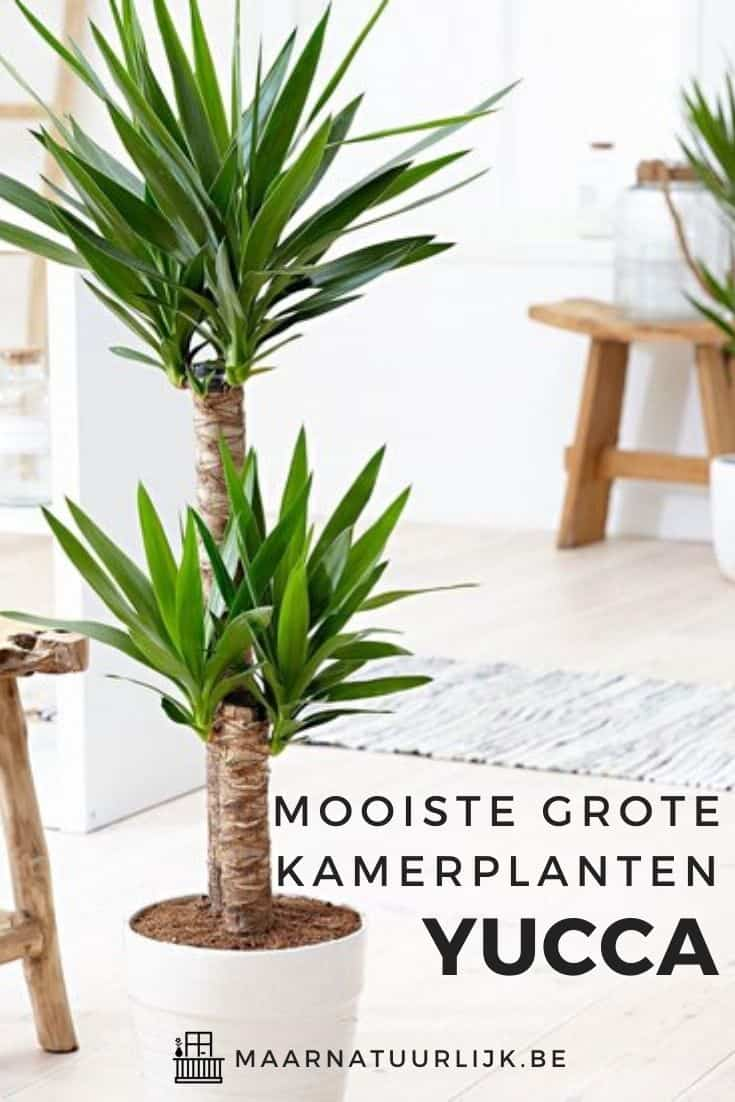 Grote Yucca palm in een lichte woonkamer