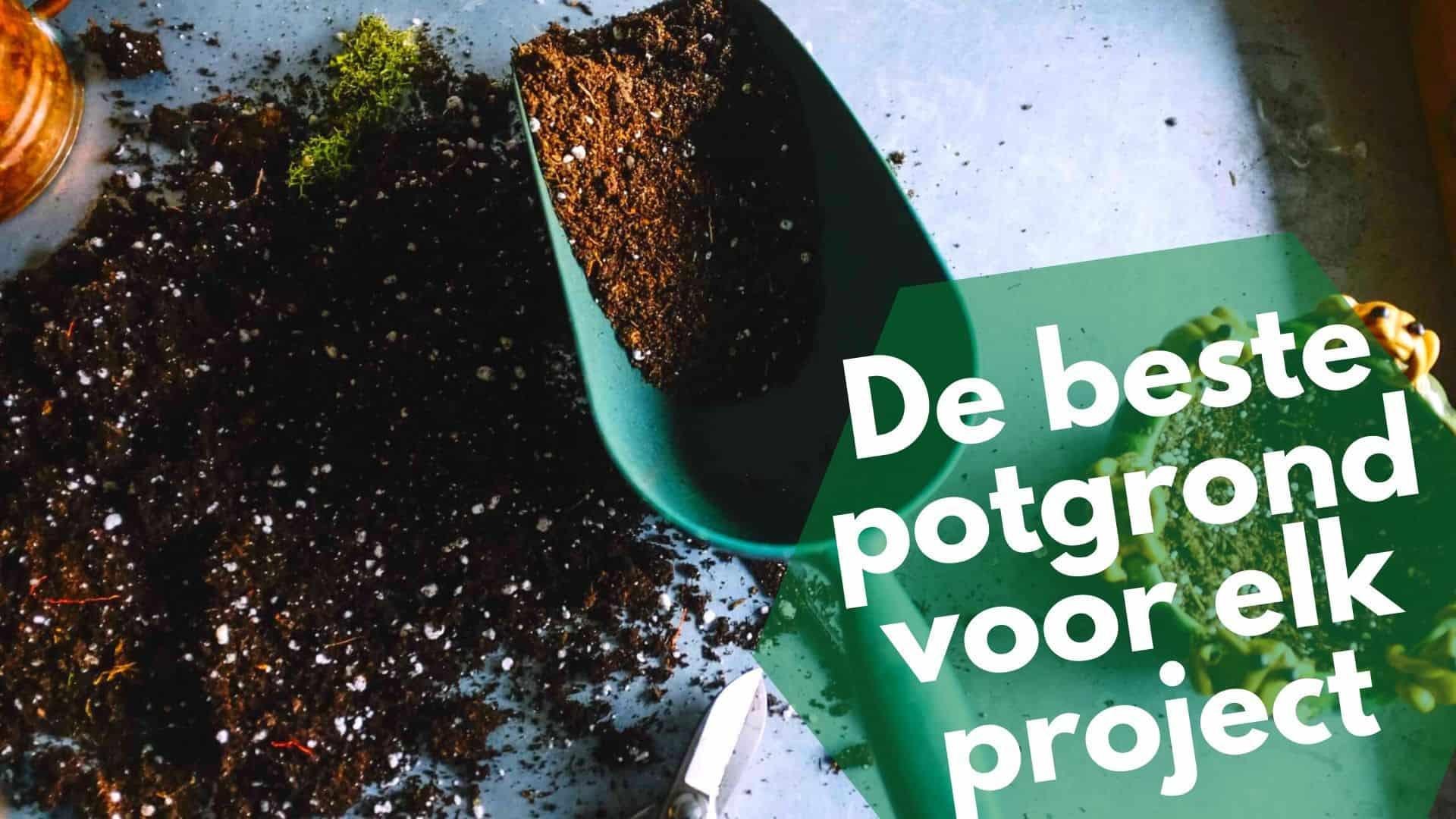 Beste potgrond | de ultieme grond gids voor jouw potplanten