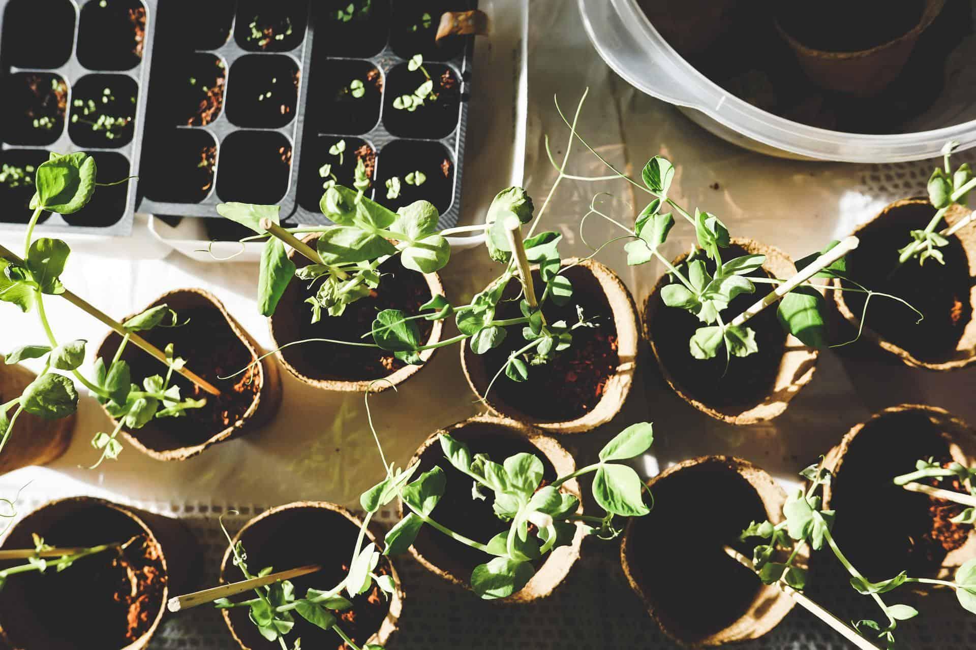 Bestanddelen van goede potgrond en waar je potgrond voor gebruikt