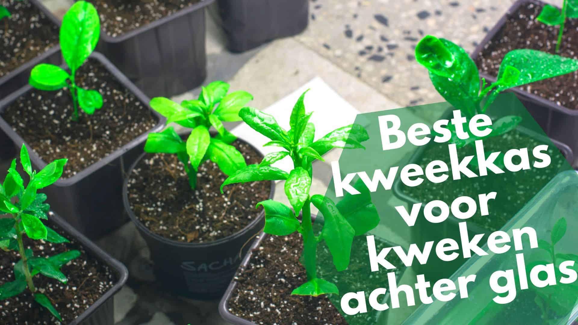 Beste kweekkas | Veilig groeien van plantjes en kruiden achter glas