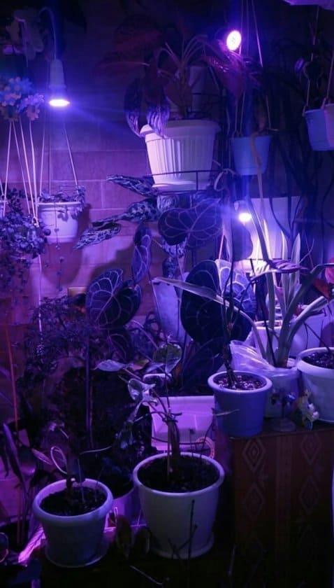 LED growlamp budget kweeklamp