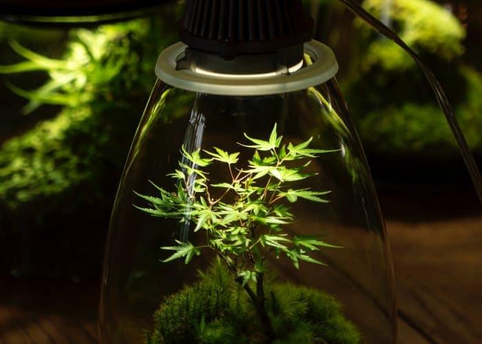 Beste LED kweeklamp