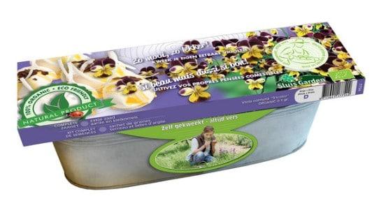 Beste hydro kweekset viooltje
